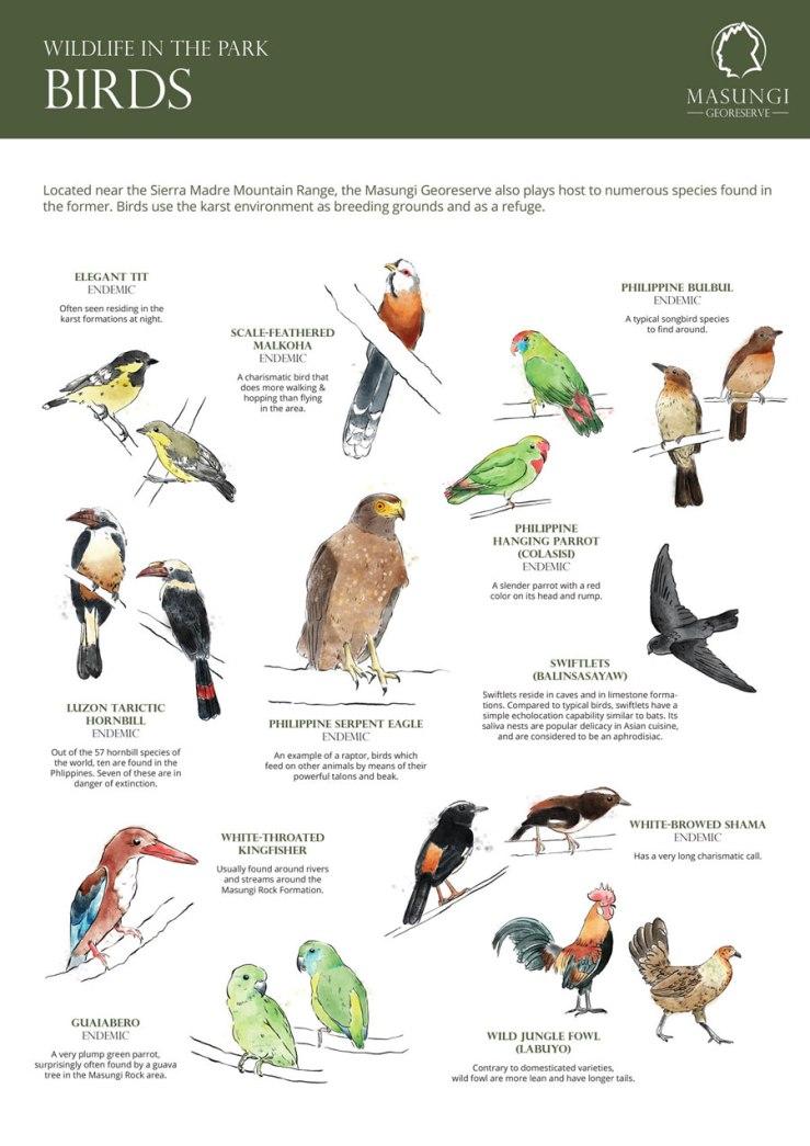 FranAlvarez-Masungi-Birds_poster